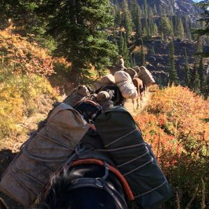 Pack train for fall hunt
